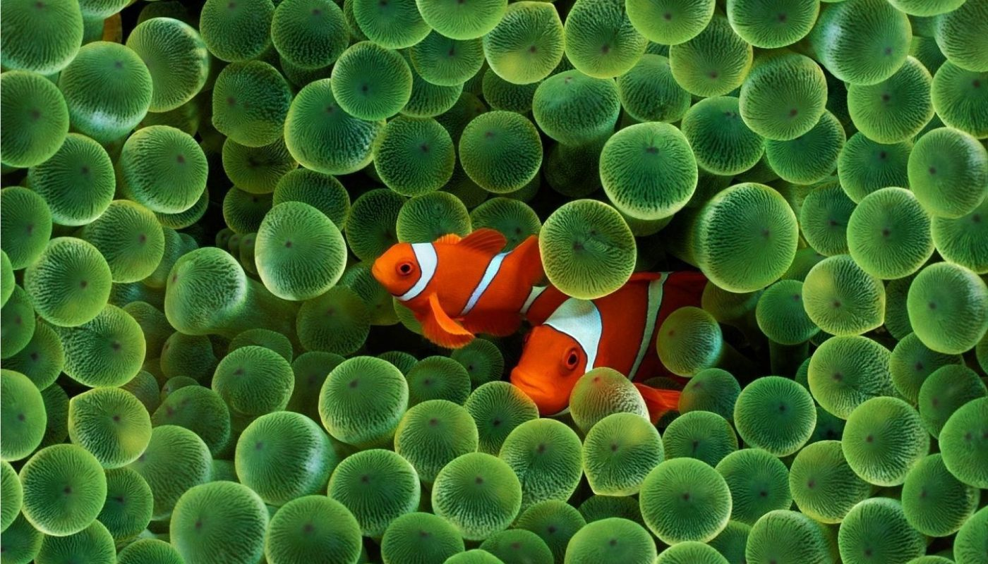 Crea un acquario marino con Fauna Marin