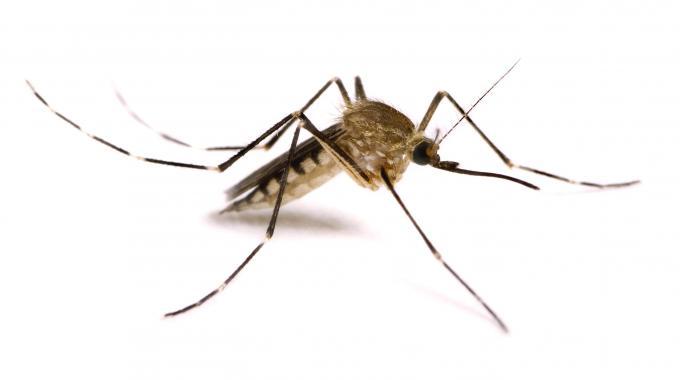 4 consigli per difendersi dalle zanzare … in giardino