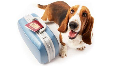 In vacanza con il cane: 8 oggetti per l'estate