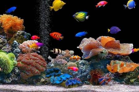 Rottamazione lampada al neon dell'acquario: prendi la led!