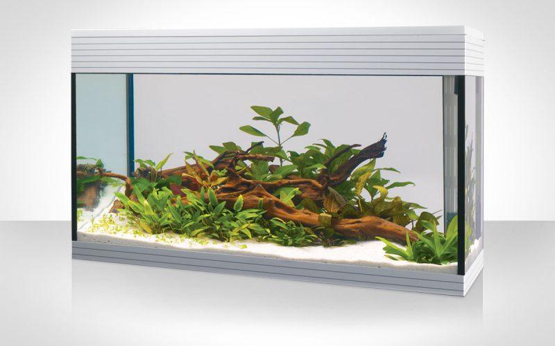 Askoll Pure Led: un acquario di nuova generazione!