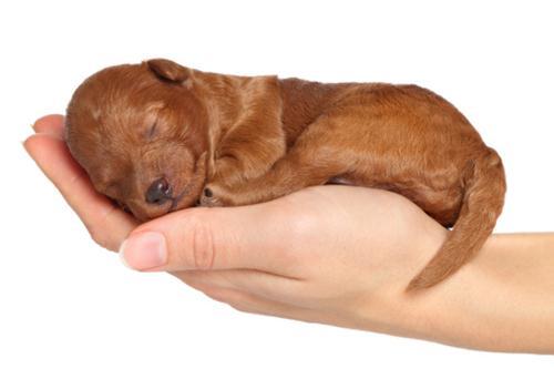 Puppy Class: Corso Cuccioli (5 incontri dal 2 al 30 aprile)