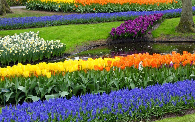 Giardinaggio: ad ogni pianta il suo concime specifico