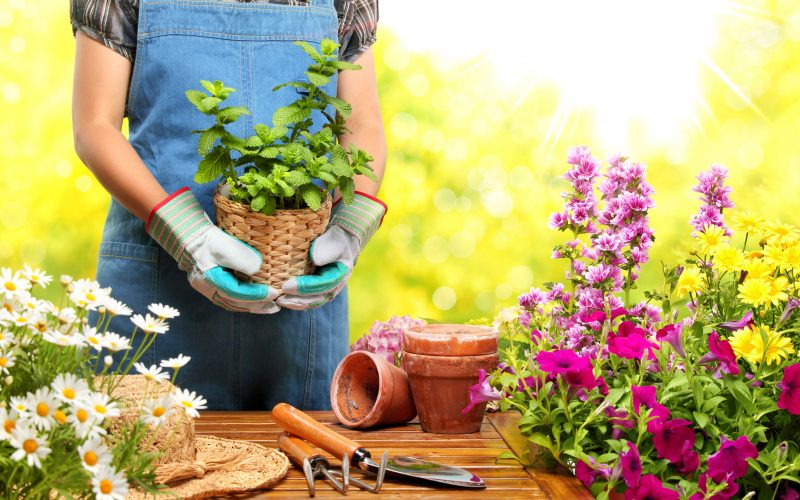 Corsi di Giardinaggio e Orto 2016