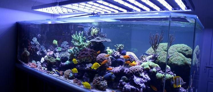 Acquario illuminazione a led agribrianza for Pesci finti per piscina