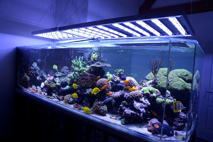 Acquario: illuminazione a led