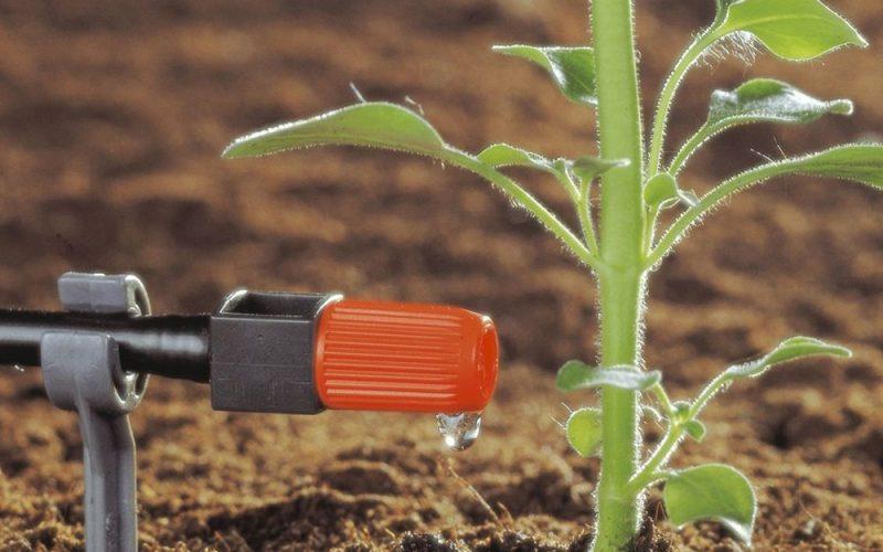 Microirrigazione o irrigazione interrata?
