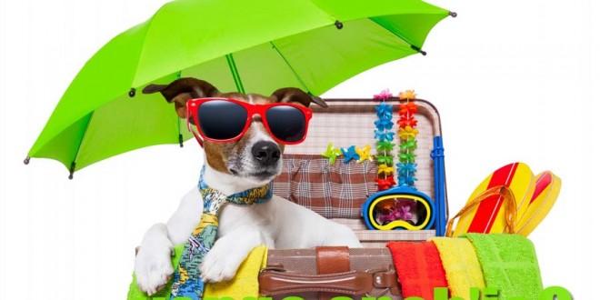 6 accessori indispensabili per un'estate con il tuo cane!
