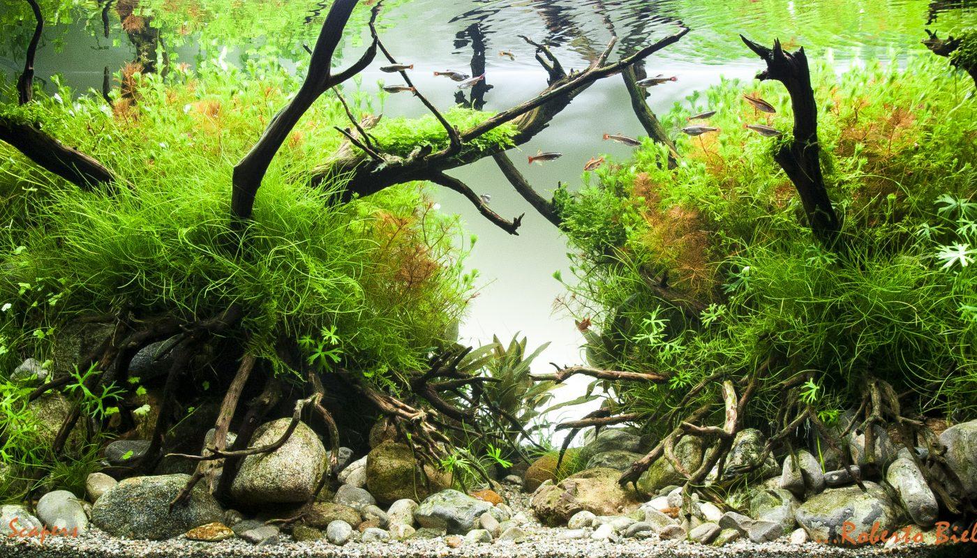 Aquascaping Live fase 2: manutenzione dell'acquario dopo 4 mesi