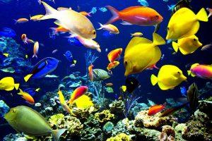 L'acquario d'acqua dolce con pesci tropicali