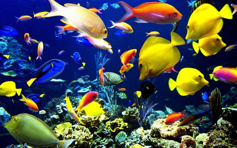 L acquario d 39 acqua dolce con pesci tropicali agribrianza for Pesci acqua dolce commestibili