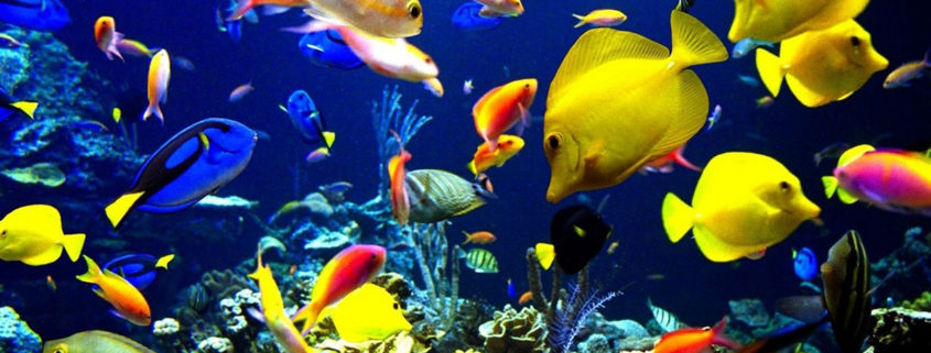 Acquari e pesci agribrianza for Acqua acquario