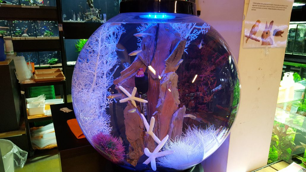 Acquario biorb design e arredo acquatico agribrianza for Acquari on line shop