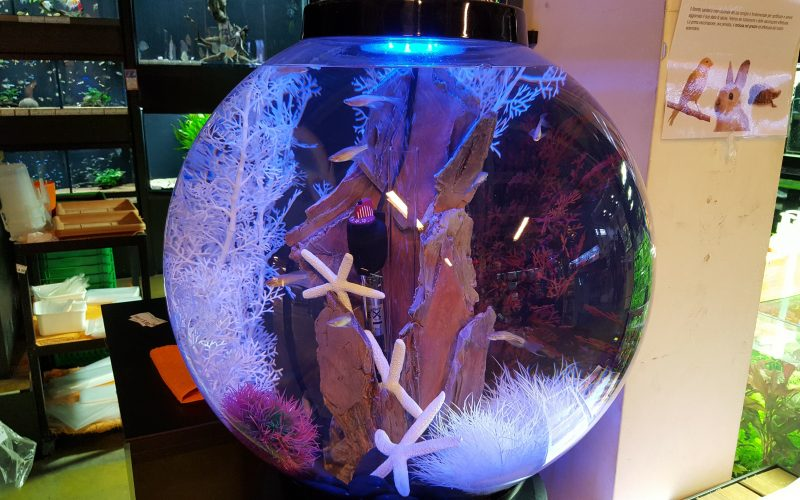 Acquario biOrb: design e arredo acquatico!