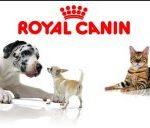 PET DAY Royal Canin