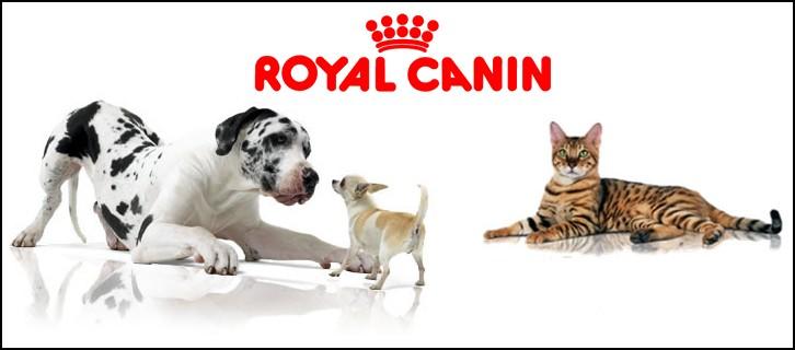 royalcanin101