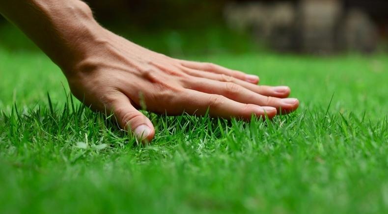 Prato perfetto: un giardino verde e sano!