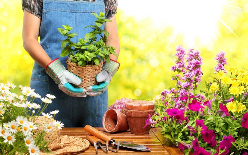 Le malattie dell'orto – Prevenirle e curarle