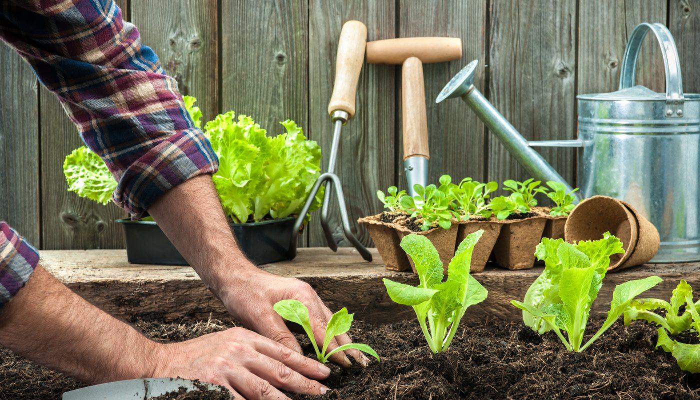 L'orto e le erbe aromatiche