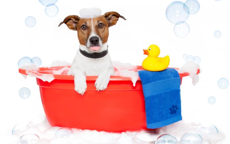 È ora del bagnetto: cosa si usa per la toeletta del cane?
