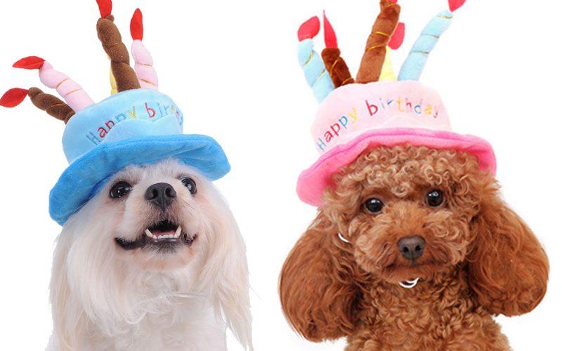 Come organizzare la festa di compleanno per il tuo cane