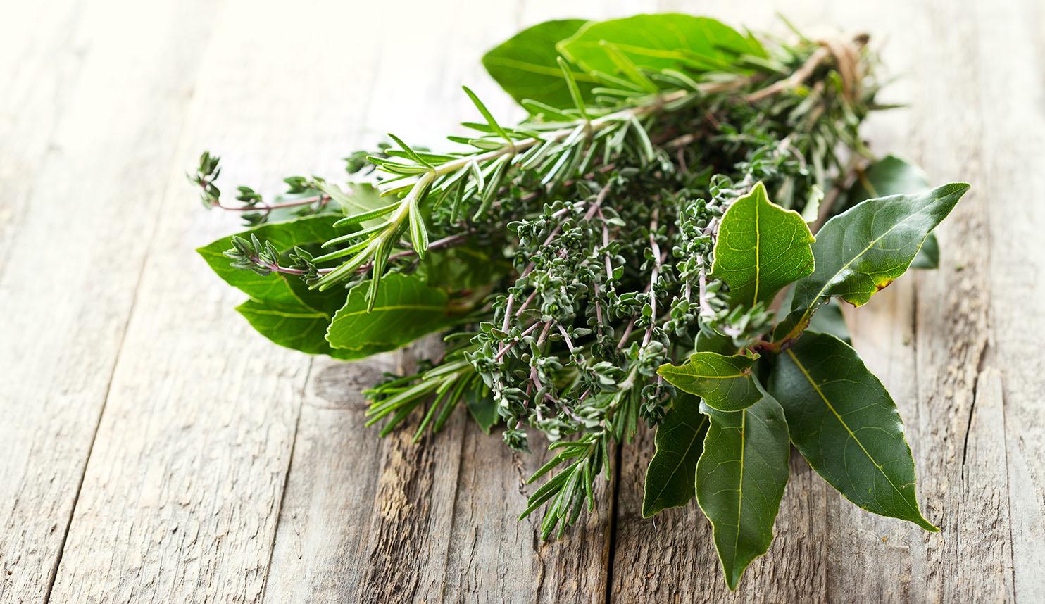 Dall 39 orto alla tavola le erbe aromatiche agribrianza - Erbe aromatiche in casa ...