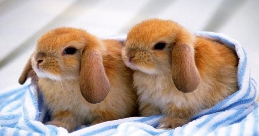 controlli veterinari conigli nani