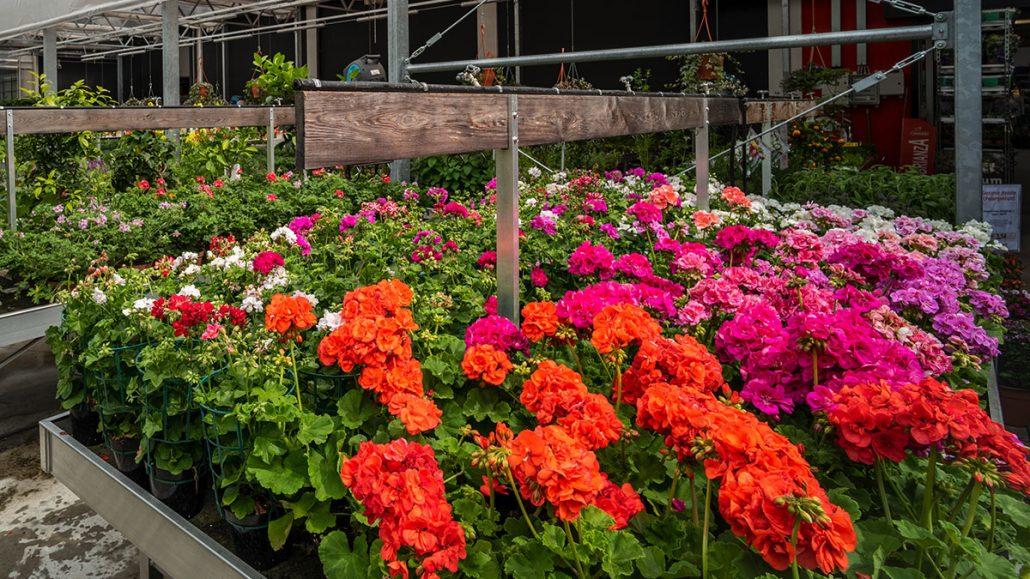 Carrello Da Giardino Usato : Orto e giardino agribrianza