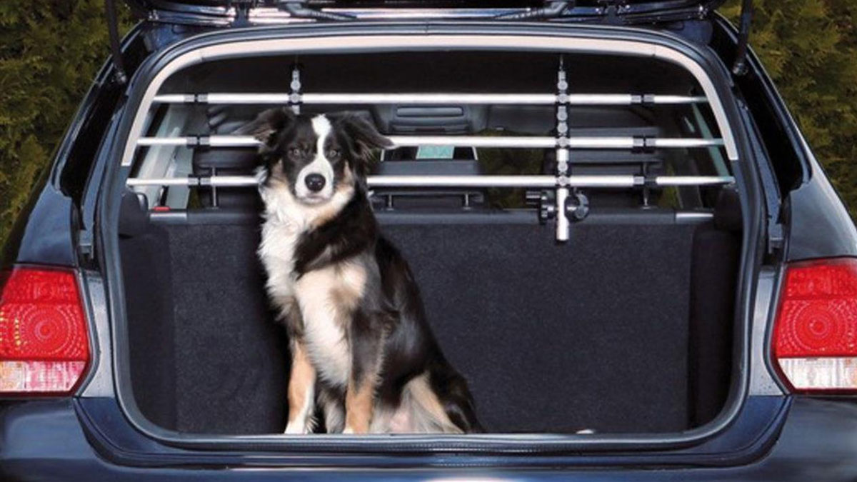 In viaggio con il cane: sicurezza prima di tutto