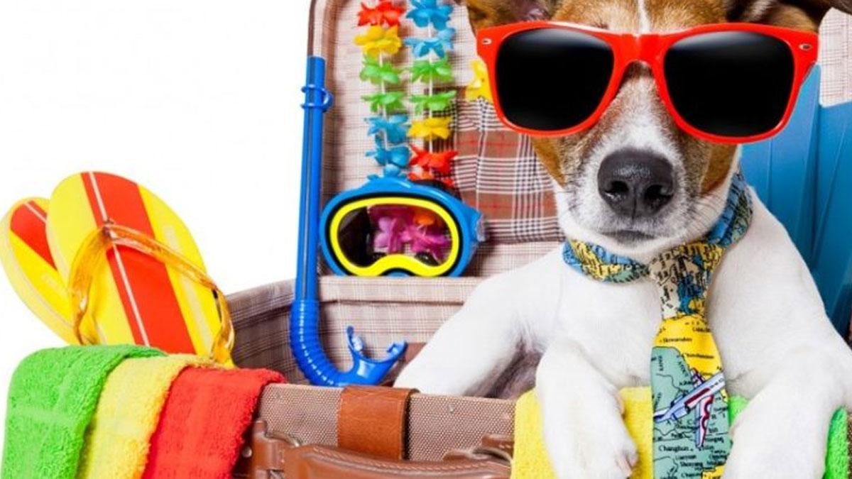 In vacanza con il cane: cosa mettere in valigia