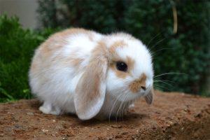 I coniglietti di Casa Fabri