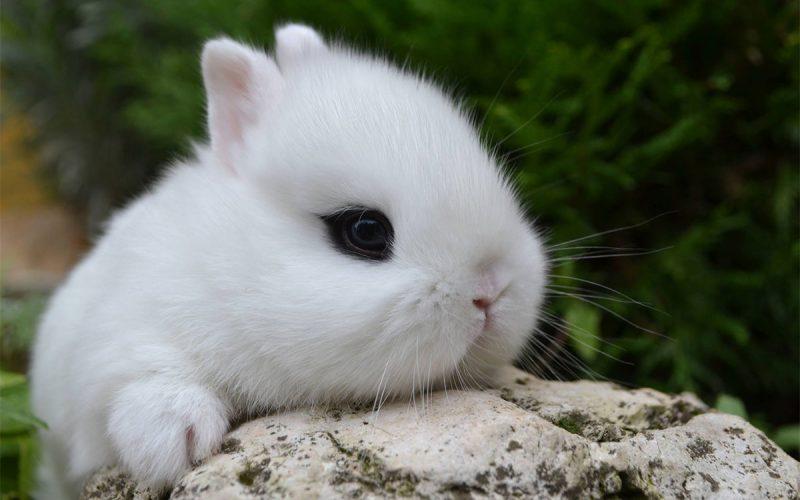 Animali Da Giardino In Plastica.Il Coniglietto Nano Un Perfetto Animale Da Compagnia Agribrianza