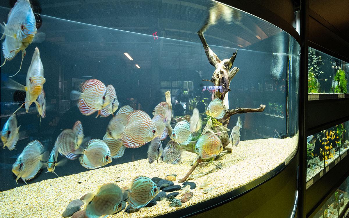 Allestire un acquario da dove iniziare agribrianza for Idrociclone per sabbia usato