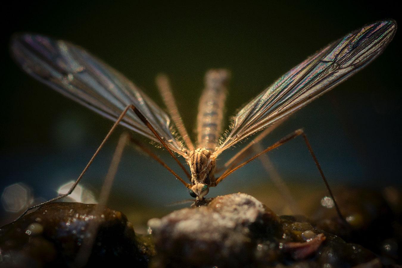 Zanzare in giardino? Disinfestazione fai da te!