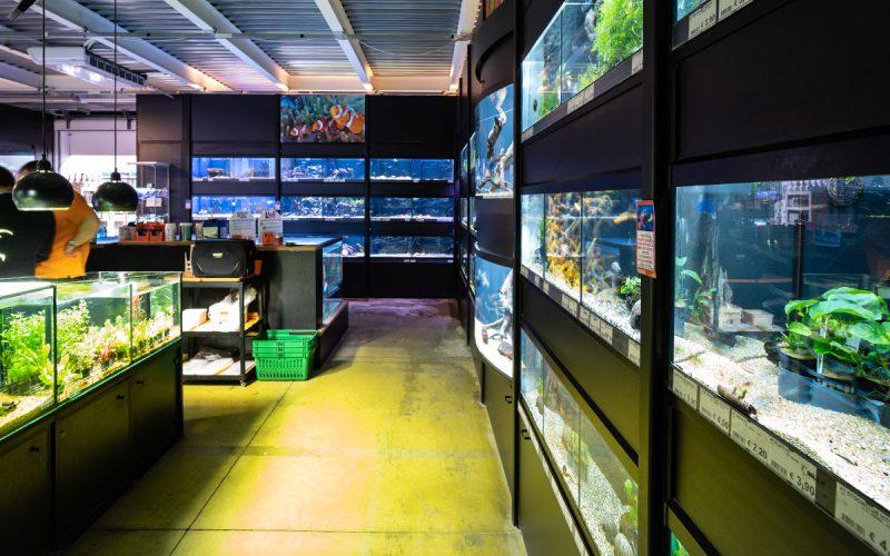 La flora in acquario, un piacere per la vista e non solo!