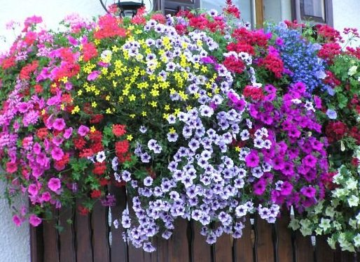Il balcone fiorito
