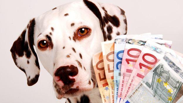 Detrazione fiscale per antiparassitari cane e gatto