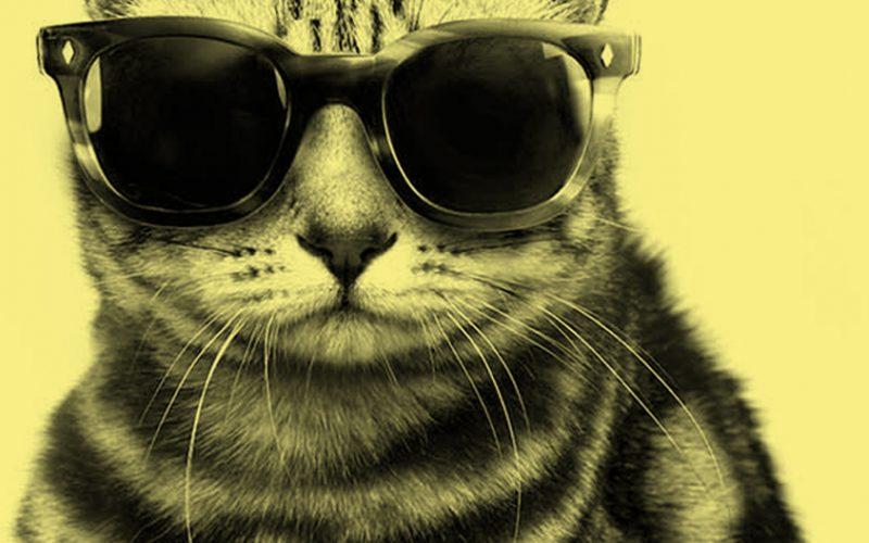 Novità: sabbie lettiere per gatti!