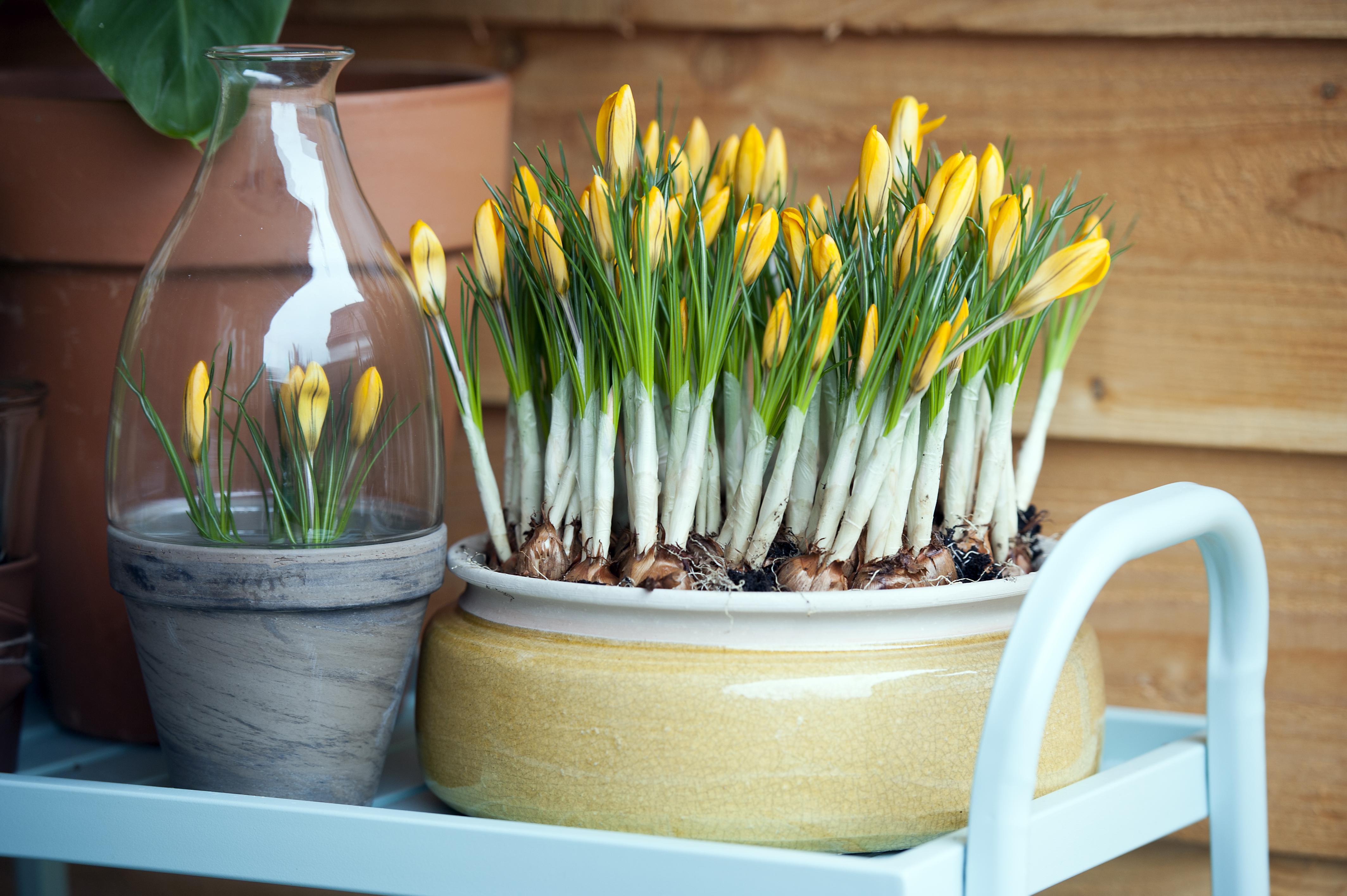 Piantare I Bulbi Di Tulipani piantare i bulbi a lasagna! - agribrianza