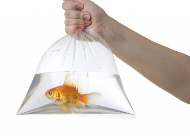 Pesce rosso… Cosa fare se è appena arrivato un nuovo ospite