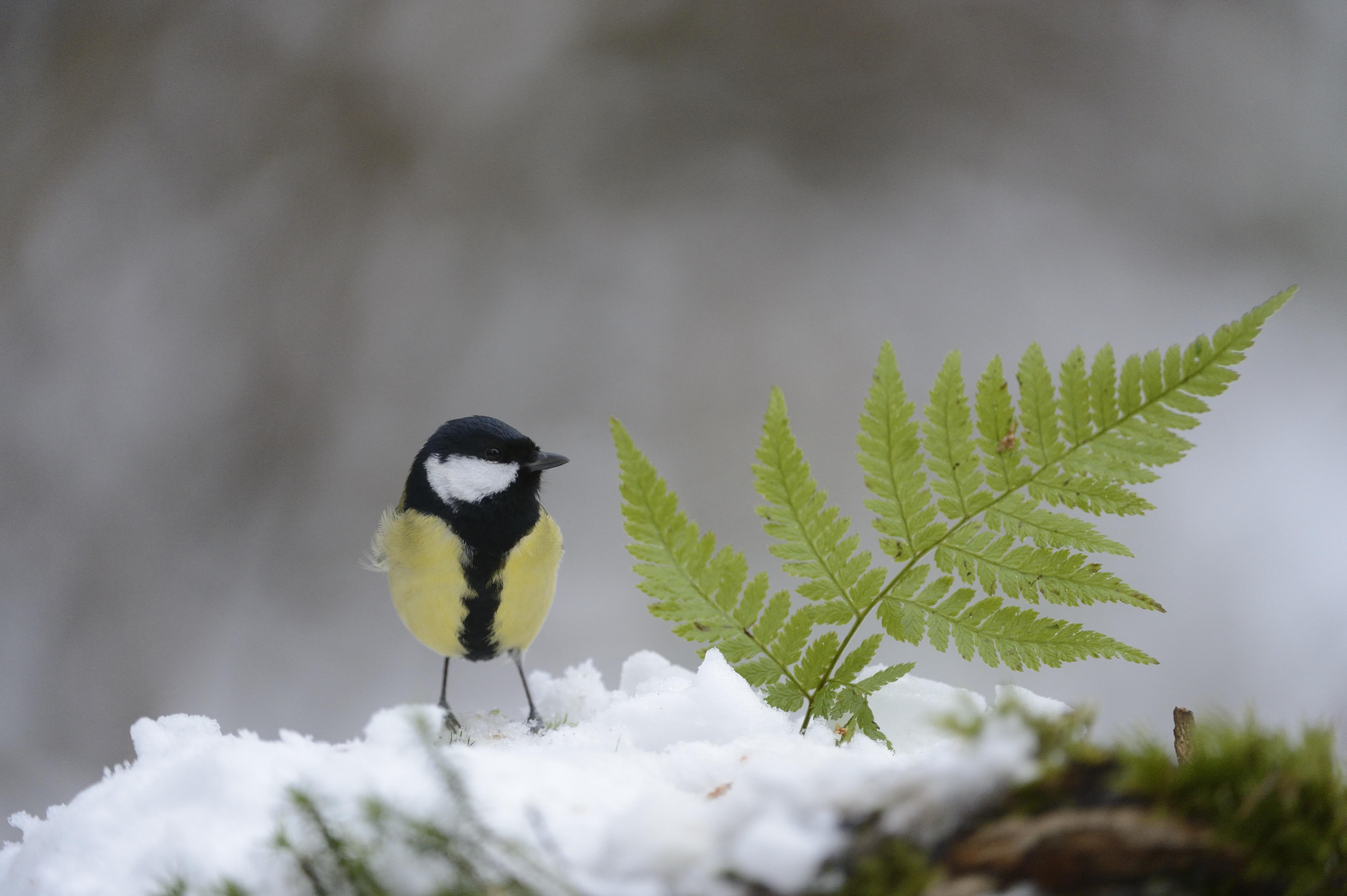 Birdfeeding: come nutrire gli uccellini in libertà in inverno