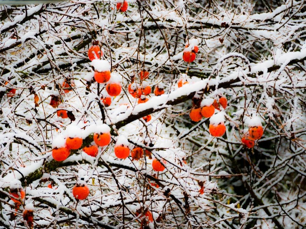 Trattamenti invernali alberi da frutto
