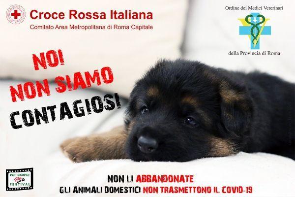 Coronavirus e cani: come comportarsi?