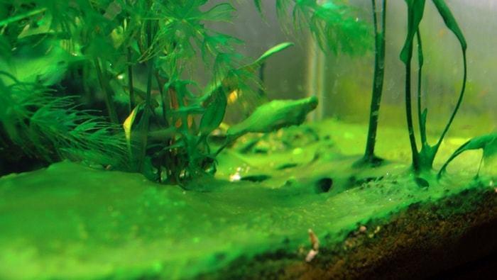 Come gestire l'acquario ai tempi del Coronavirus