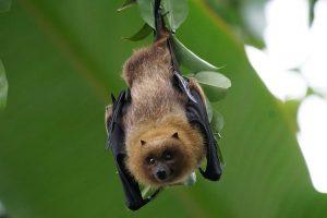 Aiutare i pipistrelli, liberarsi delle zanzare: win win