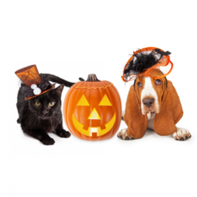 content_pets-dog-cat-halloween