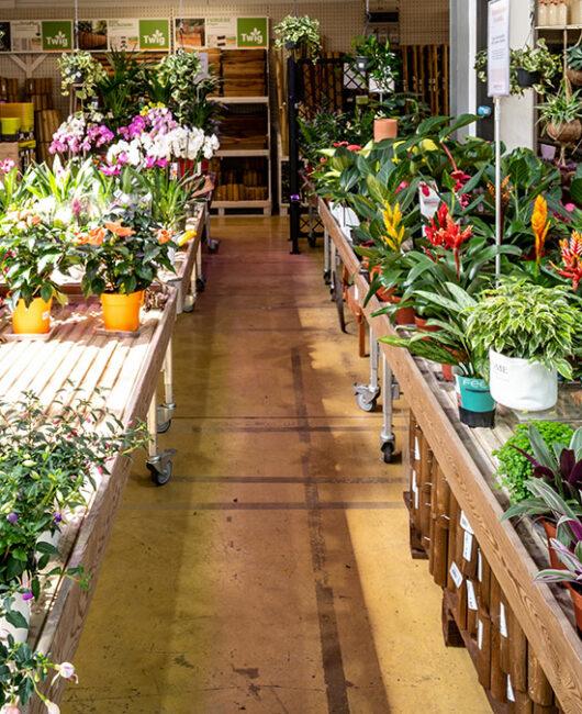 piante fiori