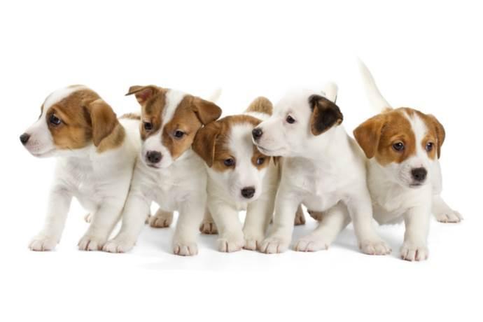 Come prepararsi all'arrivo di un nuovo cagnolino