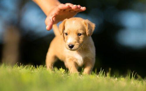 Cosa insegnare ad un cucciolo di cane entro i 6 mesi